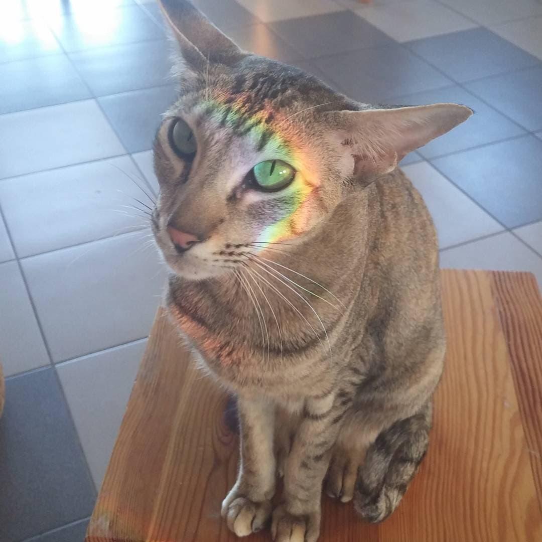 парвовирусная инфекция у кошек