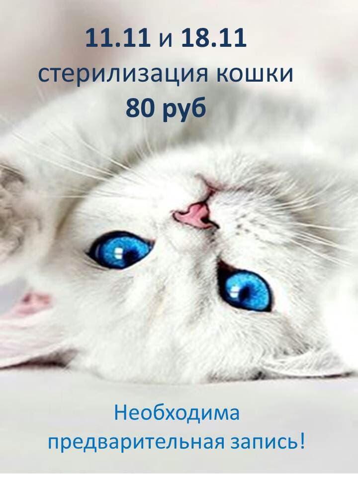 Скидка на кастрацию котов